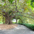 Large Tree, Royal Botanical Gardens — Stock Photo #12868566