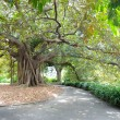 Large Tree, Royal Botanical Gardens - Stock Photo