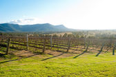 Hunter Valley, Australia — Stock Photo