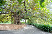 Large Tree, Royal Botanical Gardens — Stock Photo