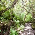 Rangitoto Island Pathways New Zealand — Stock Photo #12870784