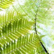 Fern - Rangitoto Island New Zealand — Stock Photo