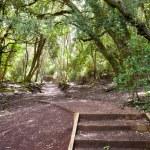 Rangitoto Island Pathways New Zealand — Stock Photo #12870799