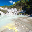 Geothermal Landscape - Rotorua, New Zealand - Stock Photo