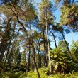 Stock Photo: Forested Landscape near Rotorua, New Zealand