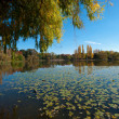 Canberra Pond, Australia — Stock Photo #12871733