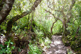 Rangitoto Island Pathways New Zealand — Stock Photo