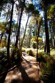 Forested Landscape near Rotorua, New Zealand — Stock Photo