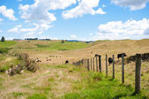 Countryside of New Zealand near Rotorua — Stock Photo