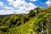 Lush Landscape near Rotorua, New Zealand — Stock Photo