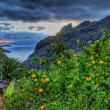 Orange tree in Masca village with mountains, Tenerife, Canarian - Stock Photo