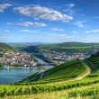 Stock Photo: Vineyard near Burg Ehrenfels, Ruedelsheim, Hessen, Germany