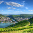 Vineyard near Burg Ehrenfels, Ruedelsheim, Hessen, Germany - Stock Photo