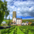 Vineyard, Ruedelsheim, Hessen, Germany - Stock Photo