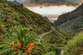 Palms and serpentine near Masca village with mountains, Tenerife — Stock Photo