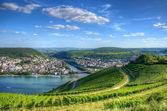 Vineyard near Burg Ehrenfels, Ruedelsheim, Hessen, Germany — Stock Photo