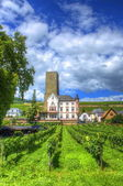 Vineyard, Ruedelsheim, Hessen, Germany — Stock Photo