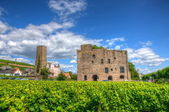 Vineyard near fortress Boosenburg, Ruedelsheim, Hessen, Germany — Stock Photo