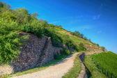 Weg in de buurt van burg ehrenfels, ruedelsheim, hessen, duitsland — Stockfoto