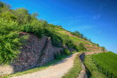 Road near Burg Ehrenfels, Ruedelsheim, Hessen, Germany — Stock Photo