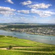 , Ruedelsheim, Rhein-main-pfalz, Germany — Stock Photo