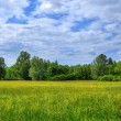 Field in Aueweiher Park  in Fulda, Hessen, Germany — Foto de Stock