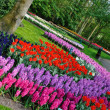 Stock Photo: Pink, purple, red, violet, blue, white and yellow tulips in Keuk