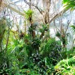Jungles in Palmen Garten, Frankfurt am Main, Hessen, Germany — Stock Photo