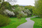 Blooming alley with trees in the park in Fulda, Hessen, Germany — Stock Photo