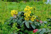Spring yellow flowers in Fulda, Hessen, Germany — Stock Photo