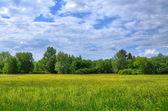 Field in Aueweiher Park in Fulda, Hessen, Germany — Stock Photo
