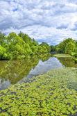Fulda river in Aueweiher Park in Fulda, Hessen, Germany — Stock Photo