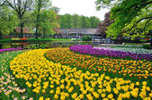 Pink, yellow, purple and white tulips in Keukenhof park in Holla — Stock Photo