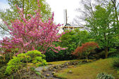 Blooming pink tree with a mill in Keukenhof park in Holland — Stock Photo