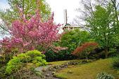 Florescendo árvore rosa com um moinho no parque keukenhof, na holanda — Foto Stock
