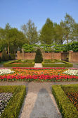 Garden with small bushes, white, orange and red tulips in Keuken — Stock Photo