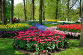 Purple, yellow, blue, pink and white tulips in Keukenhof park in — Stock Photo
