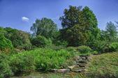Hdr 自然在柏 garten,河畔法兰克福 hessen,德国 — 图库照片