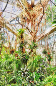 HDR Jungles in Palmen Garten, Frankfurt am Main, Hessen, Germany — Stock Photo