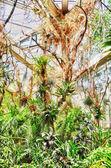 Hdr džungle v palmen garten, frankfurt am main, hesensko, německo — Stock fotografie