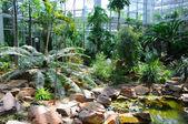 Jungle in palmen garten, frankfurt am main, hessen, duitsland — Stockfoto