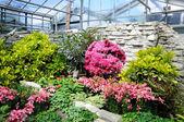 Pembe çiçekler palmen garten, frankfurt am main, hessen, almanya — Stok fotoğraf