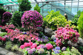 Pink and blue flowers in Palmen Garten, Frankfurt am Main, Hesse — 图库照片