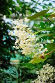 Witte bloemen in palmen garten, frankfurt am main, hessen, germa — Stockfoto