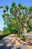 Skumma gränden med träd, frankfurt am main, hessen, tyskland — Stockfoto