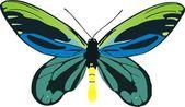 Butterfly Ornithoptera Alexandrae Rothschild — Stock Vector