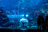 DUBAI, UAE - DECEMBER 23: Aquarium in Dubai Mall - world's largest shopping mall , Downtown Burj Dubai December 23, 2013 in Dubai, United Arab Emirates — Stock Photo