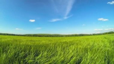 Background image of lush grass field under blue sky — Stock Video