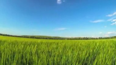 Green grass and bright blue sky in motion — Stok video