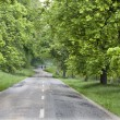 Chestnut alley after spring rain — Stock Photo